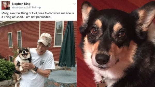 Stephen King Gives his Corgi the Perfect Nickname in Very Funny Dog Tweets