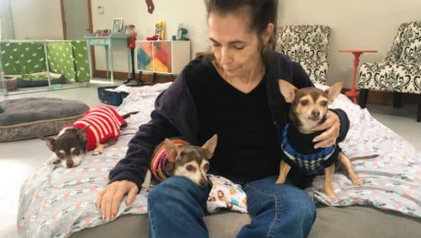 Pet Rescue Steps in to Help Care for Cancer Patient's 4 Dogs During Her Treatment