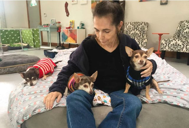 sweet snuggles with chihuahuas