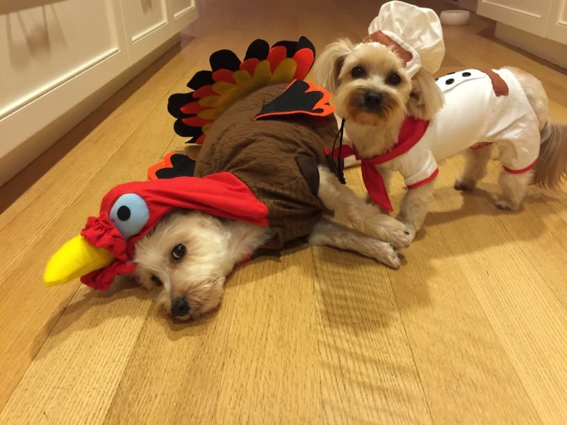 Thanksgiving dog names for dogs dressed up as turkeys