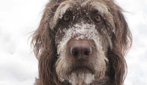 Is Your Dog Warm Enough?