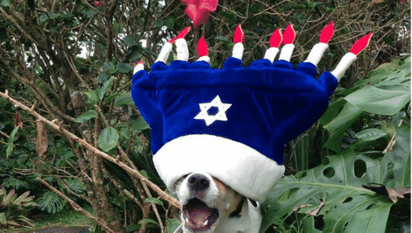 8 Adorable Dogs of Hanukkah You'll Love a Latke