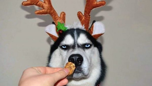 Top 10 Christmas Gifts for Your Dog