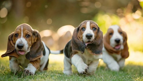 The 105 Most Popular Basset Hound Names of 2018