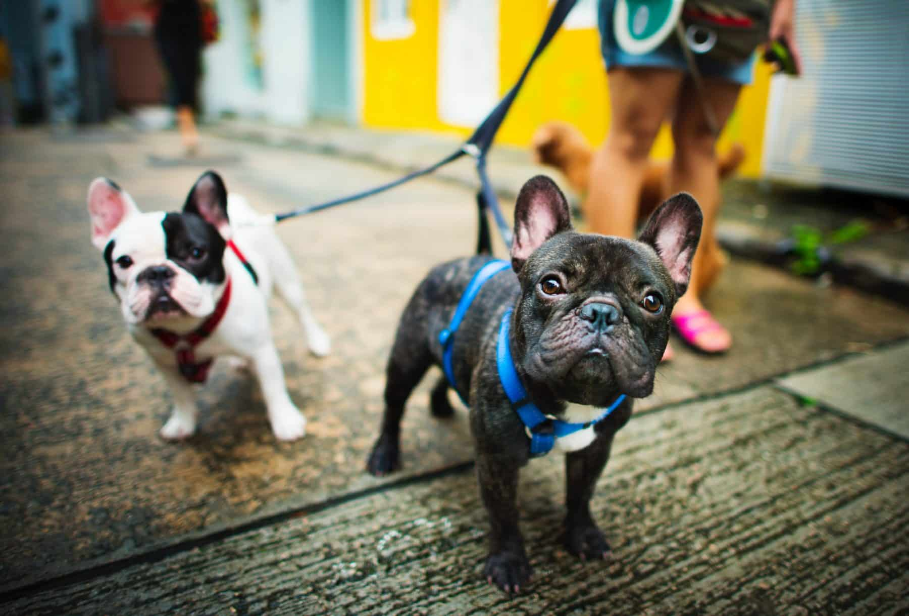 The 116 Most Popular French Bulldog Names Of 2018 The Dog People By Rover Com