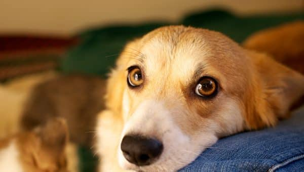 11 Spot-On Dog Calendars for 2019