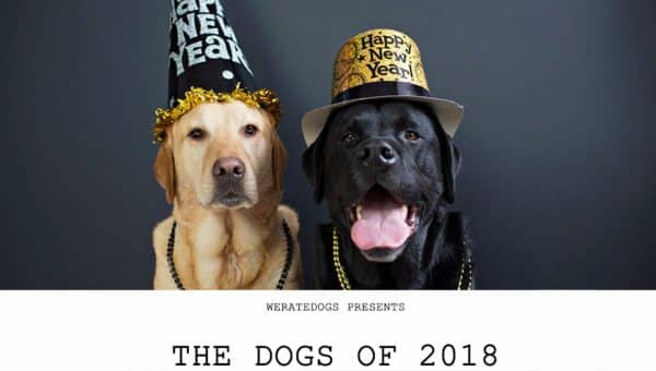 'Best Dogs of 2018' Video Released Today and We Are Here for It