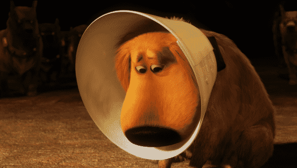 The Best Alternatives to the Classic 'Cone of Shame' for Dogs