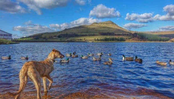 Top 5 Country Walks Around Greater Manchester
