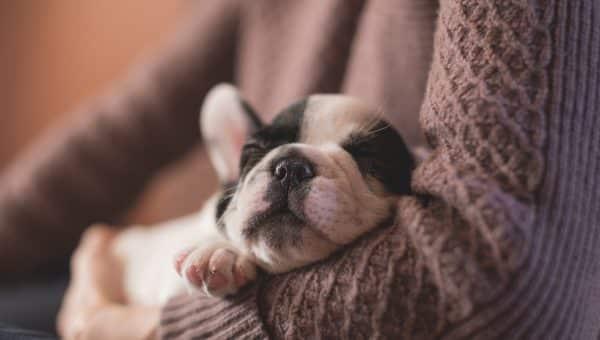 Should You Wake a Sleeping Dog?