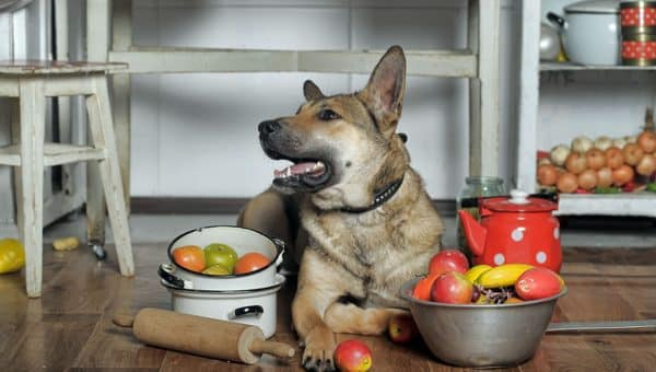 10 Perfect Gifts for the Dog Chef Who Has Everything