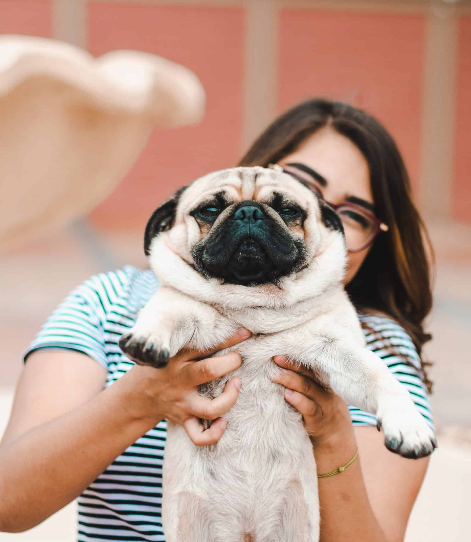 The 120 Most Popular Pug Names Of 2018 The Dog People By Rovercom