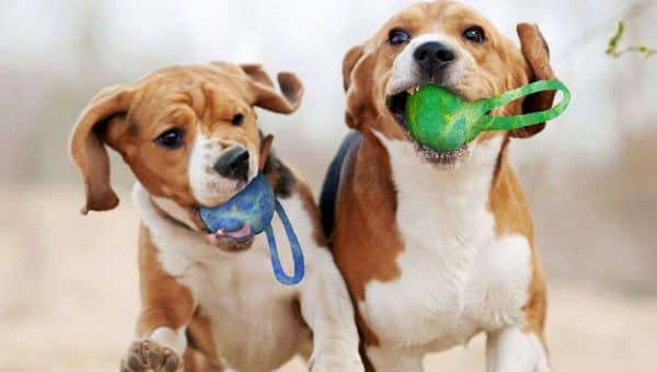 Sustainable Dog Toys: Go Green with Your Dog