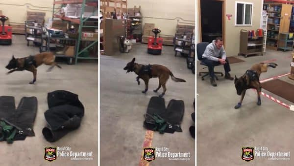 Police Dog Wears Booties for the First Time in Hilarious Viral Video