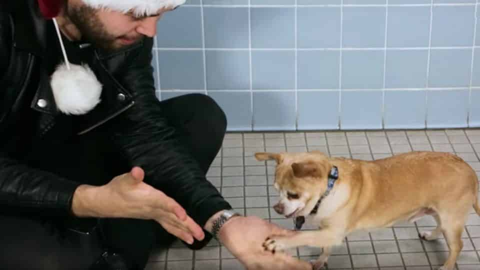 magic for shelter dogs