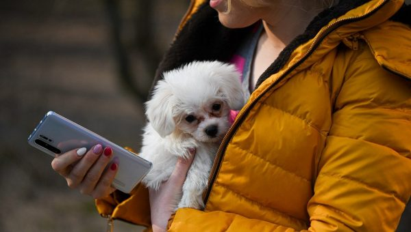 Woman carrying dog and holding phone