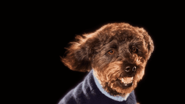 Top 10 Winter Jumpers to Keep Your Dog Cosy
