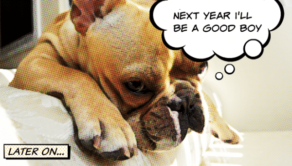 Your Dog's Top 10 New Year's Resolutions for 2019
