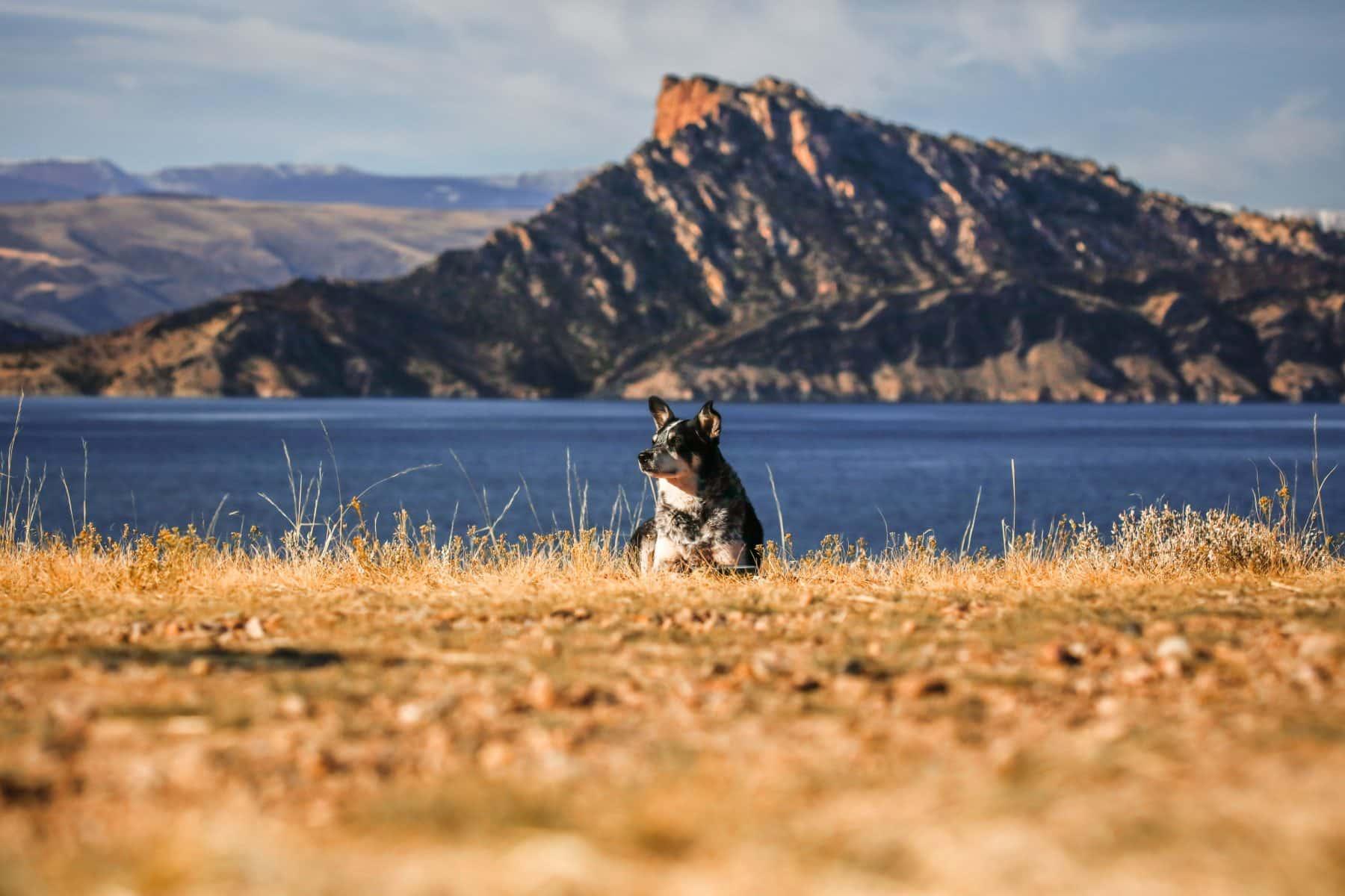 The 112 Most Popular Australian Shepherd Names of 2018 | The Dog