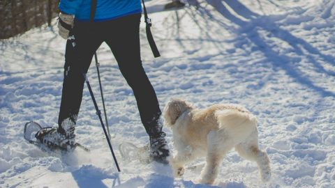 person snowshoeing with their dog