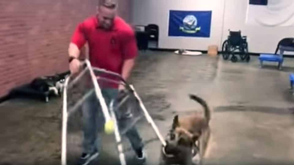Laugh As Pup Fails Service Dog Training