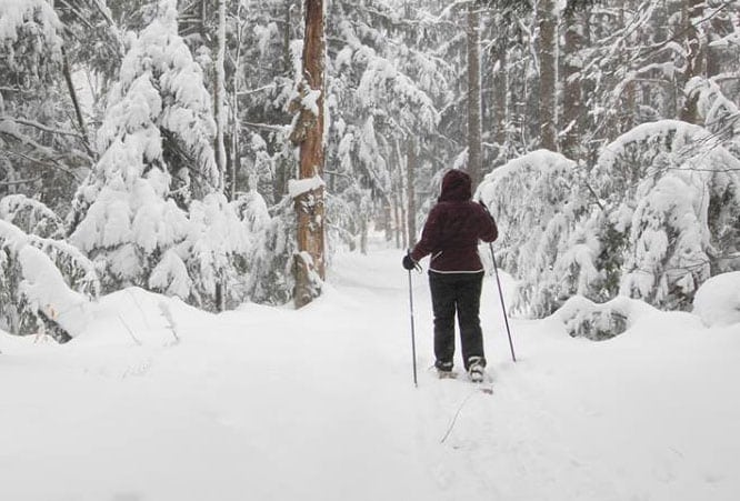 snowshoeing with dogs in winter