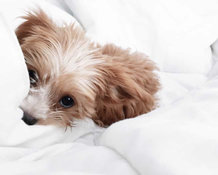 The 208 Best Dog Names That Start With R By Popularity