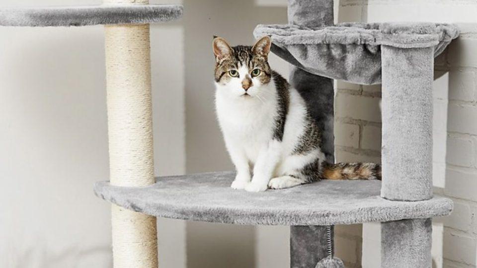 Cat in gray Frisco tree