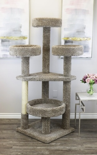 carpeted Maine Coon elevated platforms