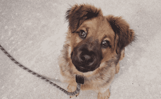 Introducing Your Puppy to the Leash: A Trainer's Ultimate Guide