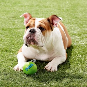 Planet Dog Orbee-Tuff Ball with Rope