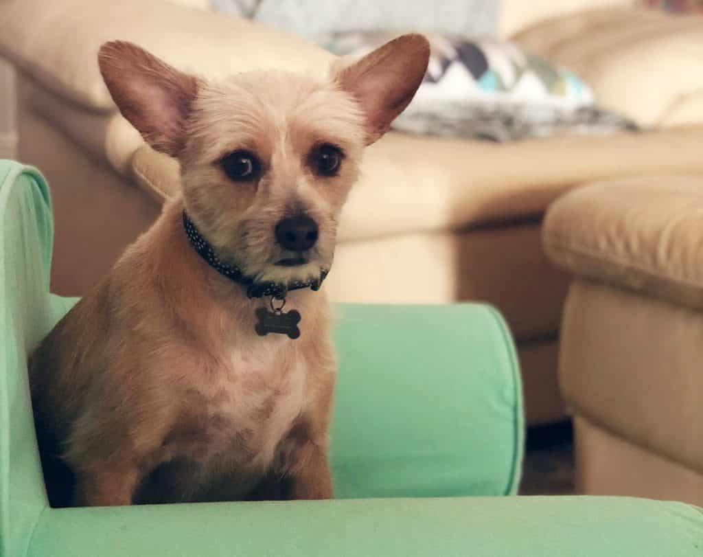 best_dog_sitters