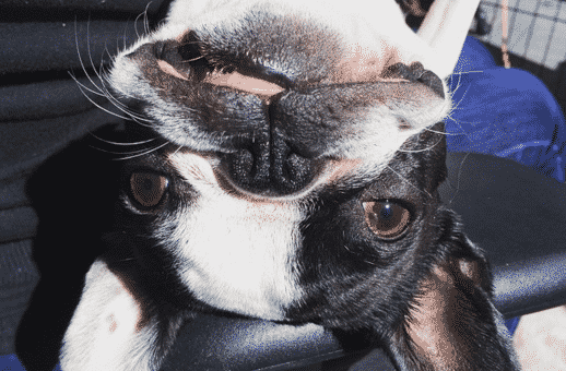 True Story: My Dog's Anal Glands Ruptured. Here's What Happened Next.
