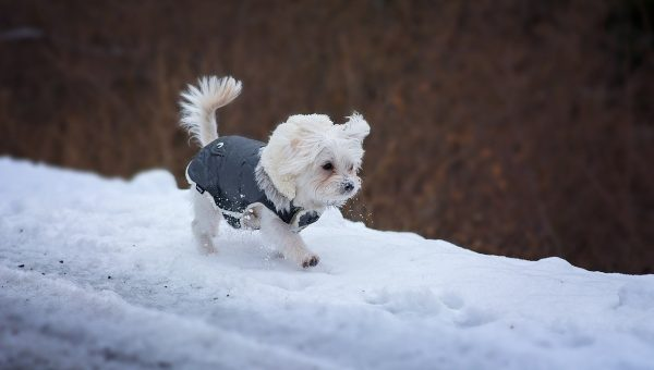 The Best Winter Dog Clothes to Keep Your Pet Warm