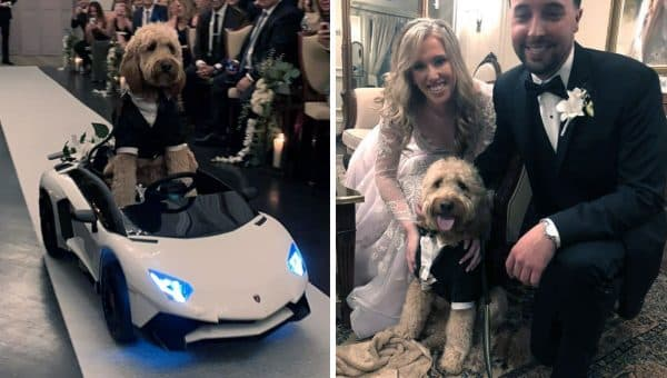 Couple Includes Goldendoodle in Their Wedding in a Big Way [Video]