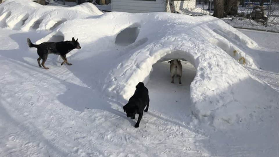 dog snow fort canada