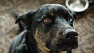 Stoppen Met Blaffen 4 Manieren Om Je Hond Minder Te Laten Blaffen