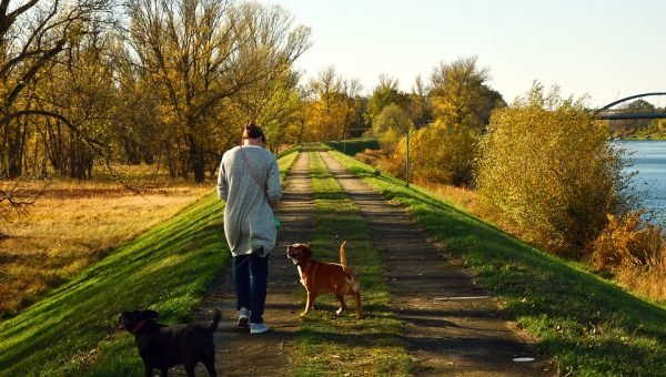 Preparing Your Dog for Their Dog Walker: A Guide