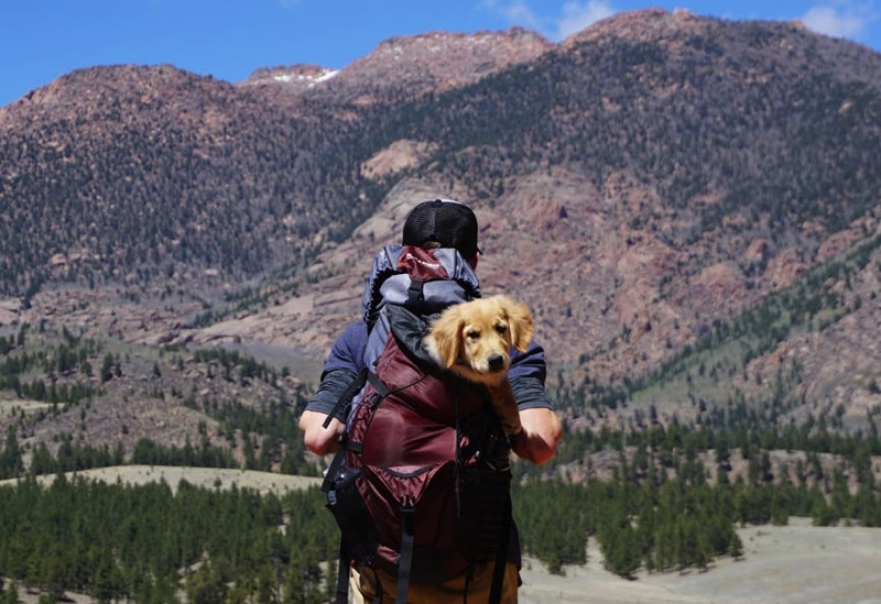 A man stands in scrub country with a puppy in his hiking backpack