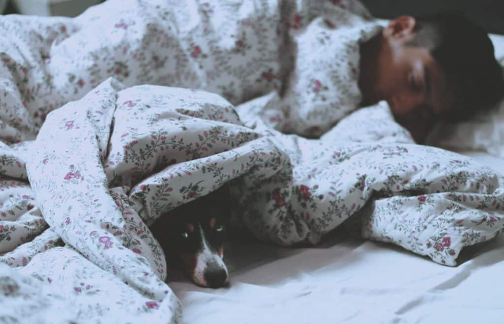 A dog sleeps under the covers with their owner.