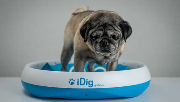 iDig Digging Dog Toy: Is It Worth the Money? [Video Review]