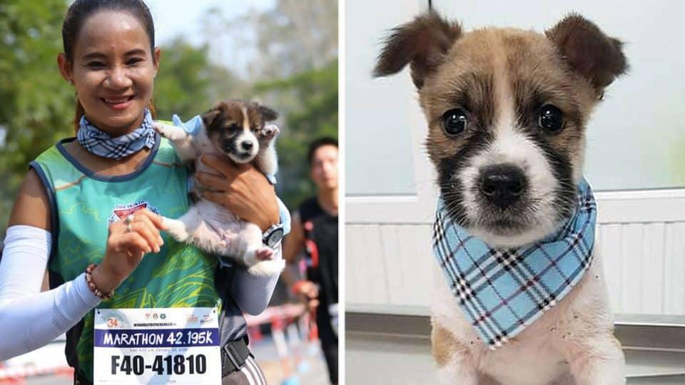 marathon runner saves puppy during race