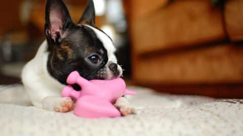 puppy daycare essentials