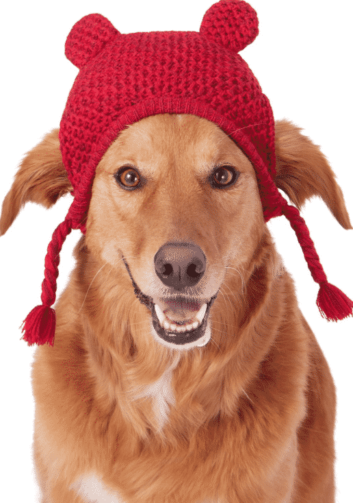 53ddb4bb556 The 8 Best Winter Dog Hats for the Next Cold Snap