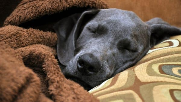 How Much Sleep do Dogs Need?