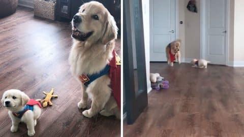 theo marshall superman fail