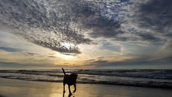 Rover Announces the Winners of the Dog Photo of the Year Contest