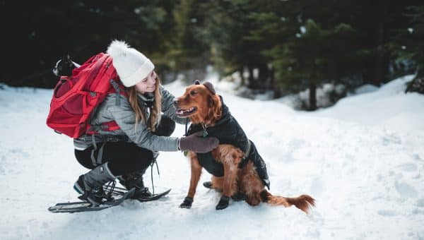We Review the Best Dog Winter Gear for 2019