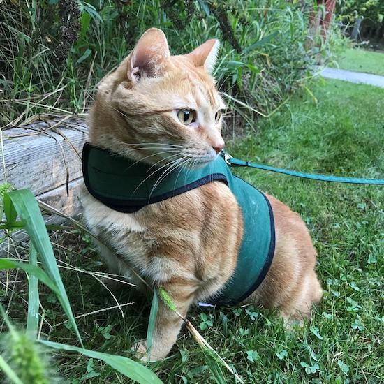 CrazyKFarm kitty holster
