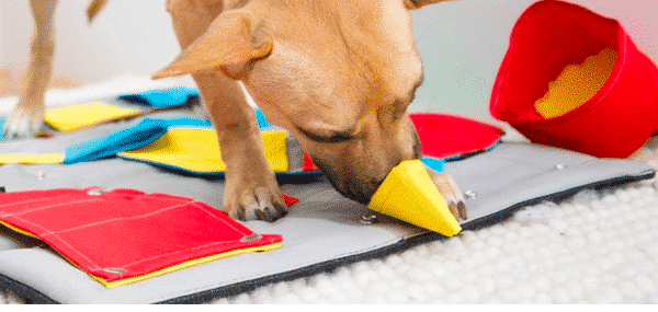 Why You Don't Need High-Tech Dog Toys: Meet the Snuffle Mat